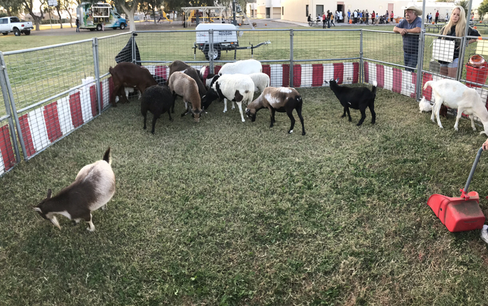 The petting zoo!